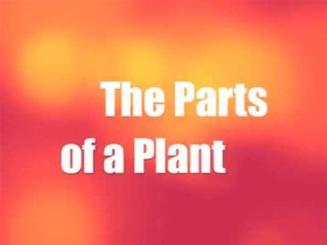 The Parts Of A Plant  Youtube