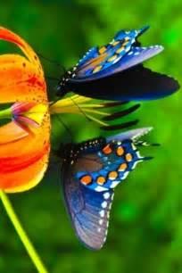 Pretty Butterflies Orange