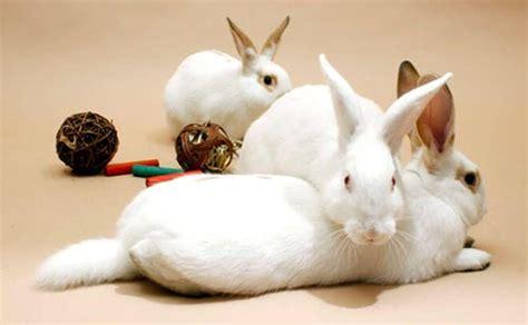 Gabbia Per Conigli Fai Da Te by Tutti I Giochi Per Conigli Nani E Come Giocare Con Un