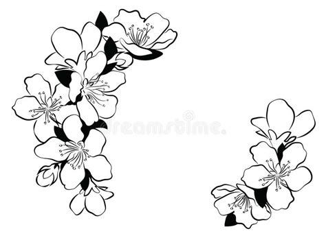 Cereza Floreciente Rama De Sakura Con Los Brotes De Flor