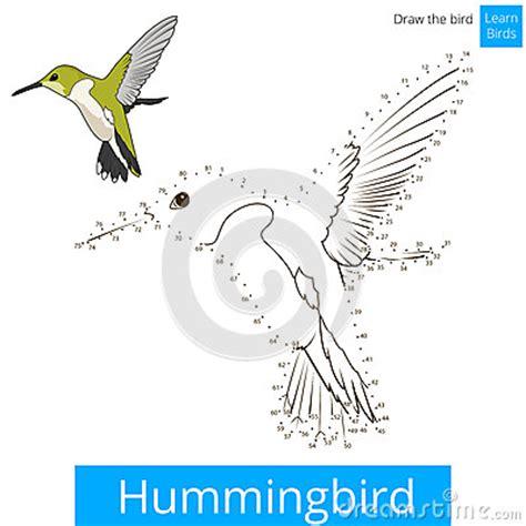 hummingbird bird learn to draw vector stock vector image