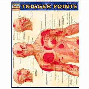 Trigger Point Referred Chart Trigger Points Study Chart By Xump Com