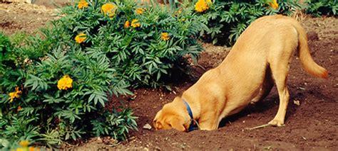 dogs   garden home wizards