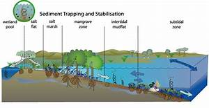 Sediment Trapping And Stabilisation