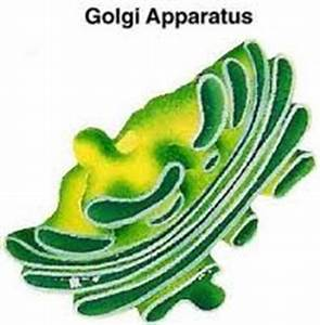 New Insights into Tempête, Seaweed and Golgi Apparatus ...