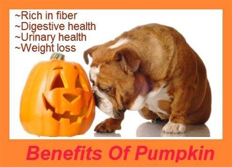 Using Pumpkin For Diarrhea In Dogs by 21 Best Images About Paws Amp Claws On Pinterest Cleanses