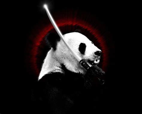 trend terbaru wallpaper gambar panda keren hd  toosh