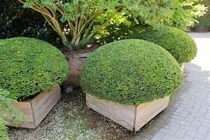 Winterharte Kübelpflanzen Schattig : k belpflanzen kaufen schatten sonne pflanzenshop k belpflanze ~ Michelbontemps.com Haus und Dekorationen