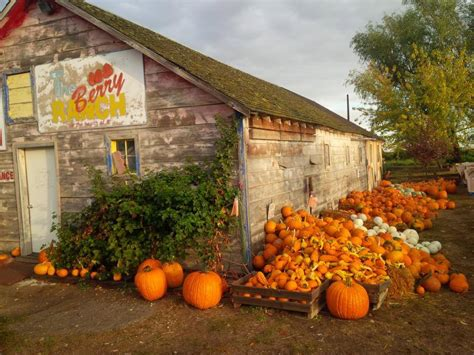 pumpkin patches idaho patch fall ranch berry perfect retail farm