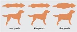 Idealgewicht Hund Berechnen : pta forum online bergewicht bei tieren der speck muss weg ~ Themetempest.com Abrechnung