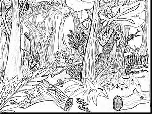 Tropical Rainforest Coloring Page 16228