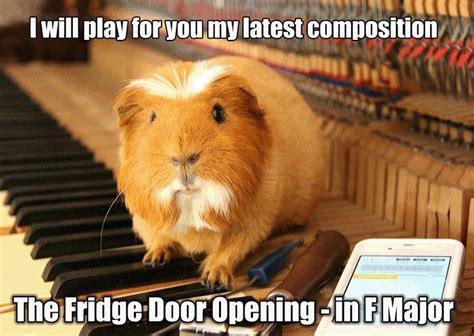 Funny Pig Memes - guinea pig meme guinea pig pinterest