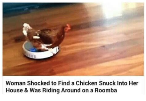 Woman Shocked To Find A Chicken Snuck Into Her House & Was