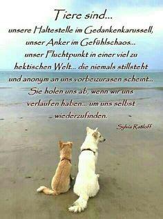 Glueckliche Haustiere Was Hunde Brauchen by Die 32 Besten Bilder Friseur Spr 252 Che Friseur Spr 252 Che