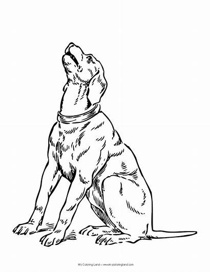 Dog Coloring Pages Shepherd Dogs Looking Specific
