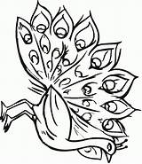 Peacock Coloring Pages Coloring2print sketch template