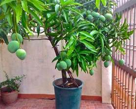 Planting Grafted Fruit Trees