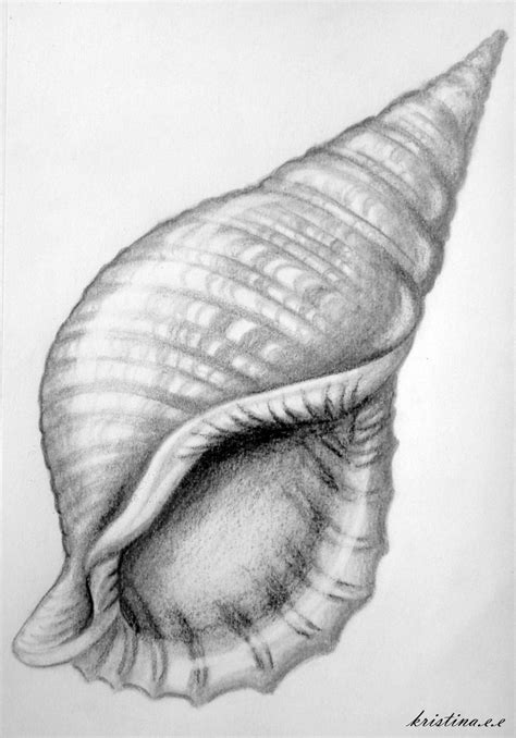 Shell Drawing Drawings Pinterest Art
