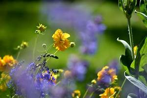 spring, , flowers, , rain, , fresh, wallpapers, hd, , , , desktop, and