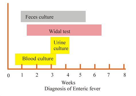 Enteric Fever Part 2 Widal Test For Typhoid Fever