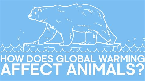 Heres How Global Warming Affects Animals Across The Globe