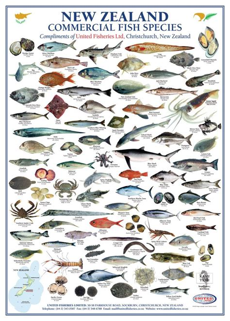 zealand commercial fish species united fisheries