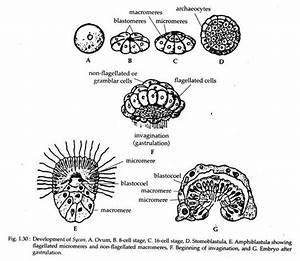 Study Notes On Scypha
