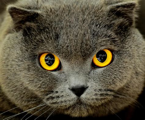 cats eye cleaning your cat s edgod animal