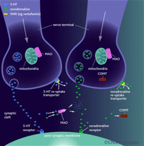 serotonin  norepinephrine reuptake inhibitors snris