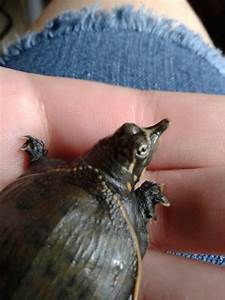 My Baby Turtle is the Cutest Turtle in the World. by ...