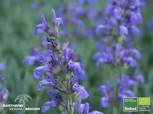 Immergrüne Winterharte Kübelpflanzen : bioland kr uter gew rz und heilpflanzen ~ Michelbontemps.com Haus und Dekorationen