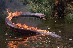 Pics For > Anaconda Movie Snake Size