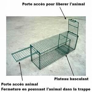 Trappe Pour Chat : trappe de capture chat avec porte basculante ~ Dode.kayakingforconservation.com Idées de Décoration