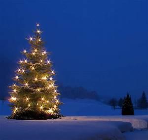Geschmückter Weihnachtsbaum Fotos : weihnachtsbaum schnee the image kid has it ~ Articles-book.com Haus und Dekorationen