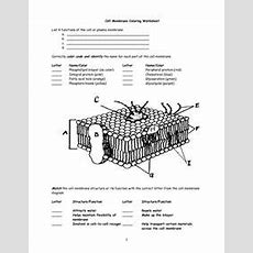 10 Best Images Of Cell Membrane Diagram Worksheet  Cell Membrane Diagram Labeled, Cell Membrane