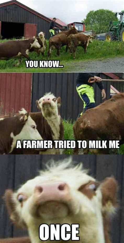 Calves Meme - scary cow