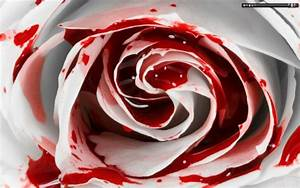 Blood And Roses Quotes. QuotesGram