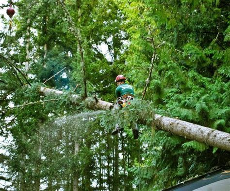 Tree Service Jacksonville Fl  Tree Removal Jacksonville. Auto Insurance In Tampa Fl Ppi Claims Company. Assisted Living Rome Ga Credit Cards Terminal. Laser Hair Removal Huntington Beach. Trees And Bushes For Landscaping. Public Storage Calabasas San Antonio Websites. Notre Dame University Online. Ocwen Financial Phone Number. Truck Driving Schools Memphis Tn