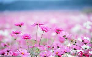 Beautiful flower scenery photos
