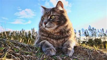 4k Cat Wallpapers Animals Resolution Cats 1080p