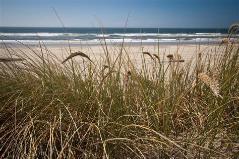 Volunteers Needed To Plant Dune Grass At Island Beach