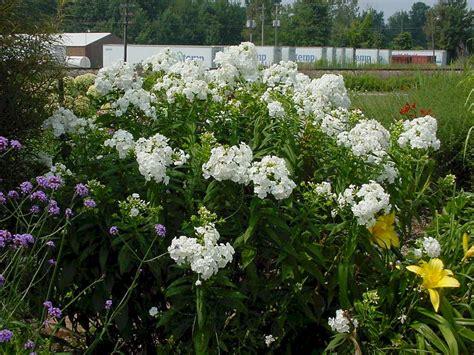 david garden w w greenhouses ppa perennial of the year