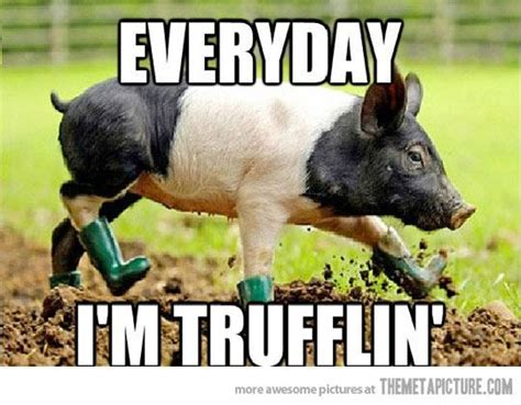 Pig Memes - funny pig meme animals pinterest funny pigs and meme