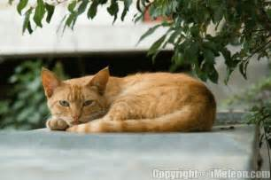 cat names for orange cats view topic sun ranch human rp accepting