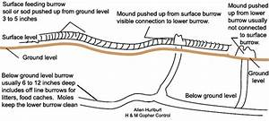Information About Gophers  Ground Squirrels  Voles  Moles  Prairie Dogs And How To Control Them
