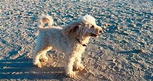 Urlaub Mit Hund Die 3 Kaiserbdern Ahlbeck Heringsdorf