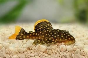Comment Savoir Si L On Est Enceinte : comment savoir si un poisson est malade 4 tapes ~ Dode.kayakingforconservation.com Idées de Décoration