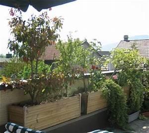 Plantes D Extérieur Pour Terrasse : plantes pour jardinieres exterieures l 39 atelier des fleurs ~ Dailycaller-alerts.com Idées de Décoration