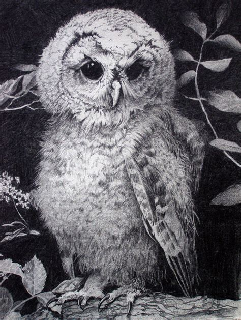 clever owl drawings  inspiration hative