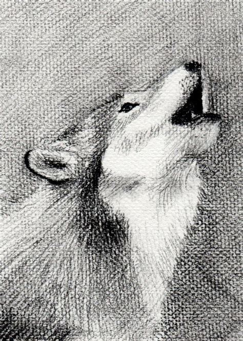 wild wolf charcoal drawing  textured